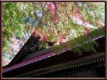 top-takayamahudou